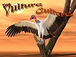 Vulture Culture; documenting all species of vulture.